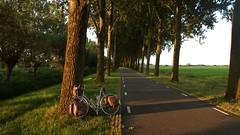 #056/130 (Shu-Sin) Tags: summer sabbatical cyclotour randonneur randonneuse shusin europe bicycle tour 650b velo bicicletta bici flatlands netherlands path tree alley dusk sunset