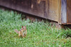 Sunny Hill Resort (Katherine Ridgley) Tags: ontario northernontario madawaskavalley madawaska sunnyhillresort barklake cottage camping animal chipmunk rodent wildlife nature