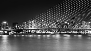 Striped Rotterdam