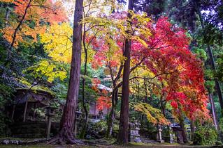 reminiscence of the last autumn (Gohodo Benzaiten shrine, Kyoto)
