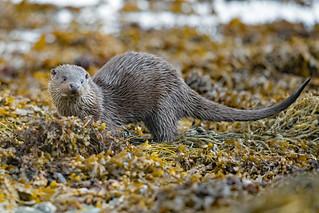 Otterly amazing encounter...