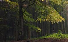 Dear Autumn and its Colors (Netsrak) Tags: bäume herbst autumn fall oktober natur licht grün blatt blätter landschaft