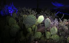 desert scene at night (JoelDeluxe) Tags: saguaro national park border crickethead inn tucson az arizona cacti landscape bednbreakfast nighttime long exposures stars wideopen skies joeldeluxe