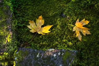 Japanese Garden Leaves and Moss 4133 A