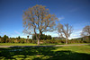 October Morning (Kevin_Jeffries) Tags: southisland newzealand kevinjeffries nikond800 nature landscape spring october nikonfxshowcase tree sky blue green
