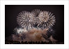 Bang Bang (prendergasttony) Tags: night dark fireworks music musical outdoors southport display nikon d7200 lancashire uk england explosive smoke tonyprendergast