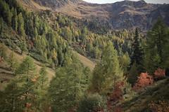 vallon d'Arby (bulbocode909) Tags: valais suisse vallondarby latzoumaz montagnes nature automne forêts arbres vert rouge