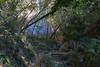 DSC01833 (cassolclaudio) Tags: montagna ferrata rio secco trento