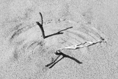 Sticks on a Curve (brucetopher) Tags: chance chaos nature natural curve sandart etching wind pattern stick sticks shadow light curving yinyang rotation 180 degree 180degree math arch draw drawing black white blackandwhite bw blackwhite monochrome contrast tone tones fibonacci fibonaccicurve goldenmean goldencurve spiral sand beach seaweed straw curveoncurve 7dwf