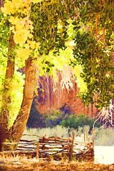 NAVAJO NATION (Irene2727) Tags: navajonation canyondechelly canyon navajoreservation arizona cottonwoodtree tree fence redrock wall autumn fall october foliage explore coth5