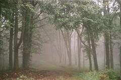 secrets (szmenazsófi) Tags: smenasymbol lomo smena analog analogue film 35mm iso200 agfavistaplus agfa forest trees országoskéktúra okt börzsöny erdő kéktúra fog foggy köd fák nature landscape hungary magyarország mist tree wood foliage