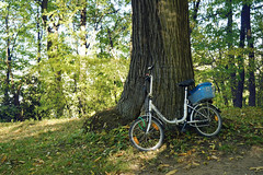 Chestnut forest in Harz (nguyenkieulinh) Tags: bike forest autu autumn germa germany sunny leaves trees