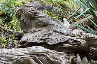 Natural sculpture