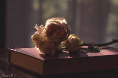 Evening shadows filling in (Irina1010_out for sometime) Tags: roses book light shadow sunset moody dreamy remarque canon stilllife