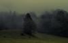 Fog in the Alps (Netsrak) Tags: alpen berge berg gebirge sommer wiese