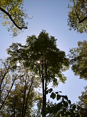 WP_20170916_12_32_57_Pro (vale 83) Tags: public garden pančevo serbia microsoft lumia 550 friends flickrcolour coloursplosion colourartaward beautifulexpression autofocus