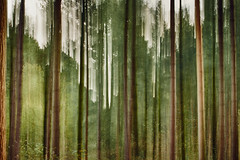 Forest abstract (Explored Oct 17) (another_scotsman) Tags: natureisanartist smileonsaturday abstract icm