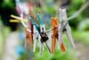 In attesa (kiareimages1) Tags: mollette pincesàlinge clothespins colors images outside focus solarium
