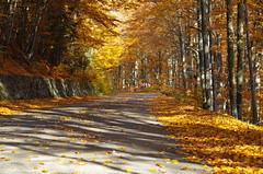 Destination: Autumn (Baubec Izzet) Tags: baubecizzet pentax autumn leaves road nature