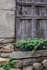 (spaetzle) Tags: volastra italy cinqueterre italianriviera shutters wood stone windowgarden fujifilmxt1
