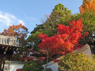 2295 Kyoto Fall RGB