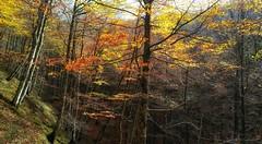 Autum (jumaro41) Tags: autum otoño árbol ccolor deporte sendero senderismo paseo eugi natural naturaleza navarra nature mountain montaña bosque