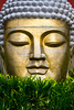 Buddha Eden (enigmamcmxc) Tags: 2017 30 7d agosto amigos bacalhoa bruno buddha canon dia eden enigmamcmxc loridos pereira portugal quinta