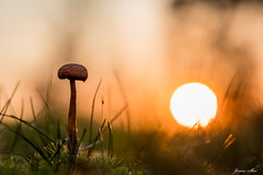Alone (janne.skei) Tags: alone sun sunshine grass mushroom shadow light silhouette art autumn afternoon autumncolors beautiful background beautifulexpression bright color colorful colors close fall green golden glorious garden insect wildlife minimalistic wild nice lovely magic moment macro nature norway norge ngc nostalgic outdoor old orange olympus plant raw sky surnadal sunset shade yellow mysterious