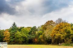 HP_DSC9541 (Nick Woods Photography) Tags: autumn autumncolours autumnleaves autumntrees autumnlandscape colour colourful colours colourfullandscape landscape leaves greenery water waterscape waterreflections waterscene nationaltrust nt hatchlands hauchlautspark