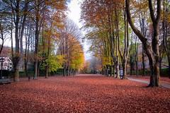 Otoño en Camprodon,Girona,Spain (jlmontes) Tags: samyang14mm nikond3100 nikon landscape arboles colores otoño paisaje españa girona camprodon spain