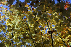 Just a beautiful autumn pastiche (rozoneill) Tags: upper rogue river trail union creek natural bridge oregon hiking siskiyou national forest gorge viewpoint