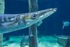 OCEANOGRÀFIC 4 (Sachada2010) Tags: sachada sachada2010 javier martin olympus epl6 valencia micro 43 panasonic 14mm zuiko 8mm 45mm f18 40150mm r oceanografic barracuda 9mm fisheye