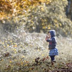 Autumn is here (michaelinvan) Tags: girl portrait autumn fall richmond leaf fallen toddler flower backlit daytime canon 5d mark2 135mm f2 childhood play moment beauty dof bokeh