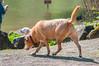 _DSC4010.jpg (orig_lowolf) Tags: d300s dog flickr lakeoswego nikon oregon people sigmaaf150500mmf563apodgoshsm usa woman