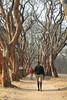 IMG_0069 (Couchabenteurer) Tags: simbabwe jacarandatree harare street