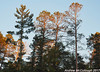Sun Setting on the Pines (Let there be light (Andy)) Tags: dusk minnesota itasca itascastatepark pines forest