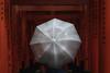 Rain and torii gates (karinavera) Tags: photography urban ilcea7m2 japan gates fushimiinarishrine rain torii umbrella kyoto shinto