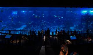 The S.E.A Aquarium in Singapore