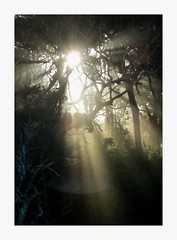 Nambucca Heads - NSW 2448 (marcel.rodrigue) Tags: nambuccaheads nambuccavalley nambuccascenery marcelrodrigue jkamidnorthcoast photography midnorthcoast newsouthwales australia nature