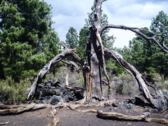 564-14-P9141261 (vgwells) Tags: approved sedona arizona grand canyon national park scottsdale montezuma castle jerome verde railroad sunset crater wupatki