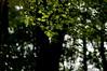 Pointilismus (svenbuchert) Tags: leaf colouredleaf branch forest nature outdoor bokeh light backlight shiny cologne autumn dof pentax pentaxian smcpa100mmf28 analoglens m42 amateur