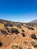 APC_0581 (TruffShuff) Tags: 2017 ca california ridgecrest may2017