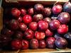 #Italian #Plum (RenateEurope) Tags: renateeurope iphoneography autumn organic delicious pflaume plum food fruits italian stilllife