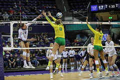 UW Oregon-FT4I0504 (Pacific Northwest Volleyball Photography) Tags: volleyball ncaa pac12 uwhuskies washington oregon