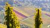 IMG_5679 (strolchi82) Tags: fellbach kappelberg herbst
