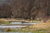 Brightwater, Mataura River, Garston (flyingkiwigirl) Tags: brightwater mataurariver garston southland trout free camping freedom sheep sheepdog