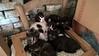 family photos (Mara Miao) Tags: kittens cats pets animals nature chair five eyes gatti love putties posing hug animali domestici sedia cuccioli