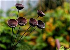 Garden Chimes...Thank You, Explore!! (angelakanner) Tags: canon70d helios442 longisland garden chimes raindrops