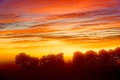 Rainbow Dawn. (alan.irons) Tags: rainbowcolours sunrise fog mist trees silhouette outdoors angus glamis colours nature sun sunset sept2017 eos1dxmk2 ef2470f28llusm scotland dawn glow glowing