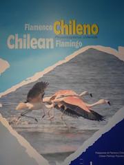 ChileAtacamaLagunas046 (tjabeljan) Tags: lagunas atacama salar salardeatacama toconao jeri chile chili andes